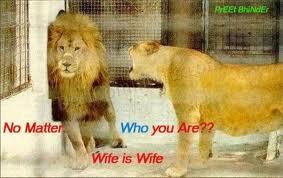 images lion.jpg