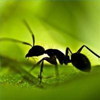 natural_ways_kill_ants_home_200X200_xlarge.jpg