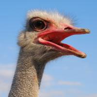 ostrich-current-recession-01.jpg