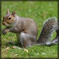 squirrel-large.jpg